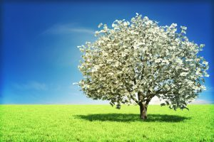 From the Field: Building Your Shopping Annuity